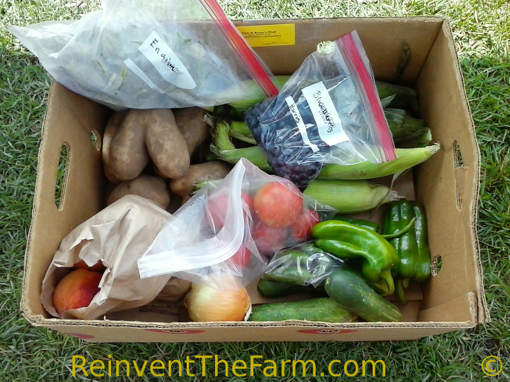 Fruits and Vegetables in a summer CSA basket